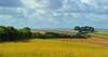 A hedge, East Garston, Berkshire, England (Oswald Bertram) Tags: northwessexdowns lambourndowns berkshiredowns landscape landschaft paysage paisaje paesaggio summer sommer estate verano été angleterre inglaterra inghilterra