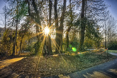 Afternoon Sunlight, 2018.01.02 (Aaron Glenn Campbell) Tags: knoxville lakeshorepark easterntennessee tennessee tn backlit backlighting sunflare lensflare park winter outdoors walking path exercise trees 3xp ±2ev hdr macphun aurorahdr2017 on1effects nikcollection colorefexpro viveza sony a6000 ilce6000 mirrorless sigma 19mmf28exdn wideangle primelens emount
