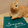 Burgues Hare 07 (anothertom) Tags: bunny rabbit vintage figure hare item porcelain art irvingcarlburgues eighties fromnewjersey pamphlet 2017 sonyrx100v
