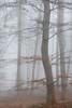 Buchen im Nebel (Petra Runge) Tags: nebel waldundbäume wald bäume herbst misty fog autumn beeches trees wood deutschland germany buchen natur nature forest
