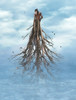 Evolution (Anamae .) Tags: evolution photo manipulation conceptual art man tree ocean landscape nature birds happy holidays merry christmas new year roots