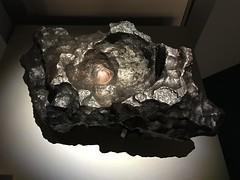 Gibeon (Christophe Rose) Tags: mnhn namibie fer 75005 galeriedelévolution paris jardindesplantes météorite
