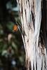 (ampersandyslexia) Tags: sanluisobispo monarchbutterfly