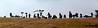 Che sagome! (Colombaie) Tags: piemonte passeggiata 1gennaio campagna amici amicizia parenti faranovarese vigneti trekking hiking assieme insieme famiglia presepe presepio collina sagome ritratto uomo uomini maschio donna donne femmina ridere humor capodanno flickraward