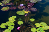 Lilly PondLO-0007 (Mary D'Elia) Tags: fernflorida flowers lillypads nature water waterlillies