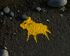 Paint My Dog (Steve Taylor (Photography)) Tags: animal dog art yellow paint tarmac pebble newzealand nz southisland canterbury christchurch newbrighton shape heart lichen