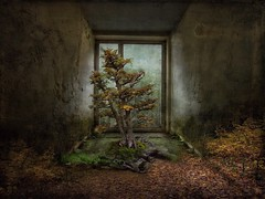 About Trees lll (jimlaskowicz) Tags: jimlaskowicz decay grunge leaves realism artistic room hidden textures impressionistic surreal dream tale story mystery secret trees