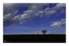 fool on the hill (alamond) Tags: tree favorite fool hill sky blue clouds lonelytree lonely canon 7d markii mkii llens ef 1740 f4 l usm alamond brane zalar