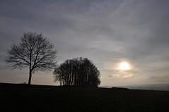 Einer für alle - Alle für einen (Uli He - Fotofee) Tags: ulrike ulrikehe uli ulihe ulrikehergert hergert nikon nikond90 fotofee januar winter sonnentag meinweg klaumarbach marbach