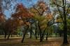 Colors of Autumn (hamzaqayyum) Tags: autumn tree leaves hdr landscape outdoor nature naturallight islamabad pakistan fujifilm