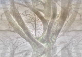 * ... l'albero esce dalla nebbia *  ... the tree coming through the fog *