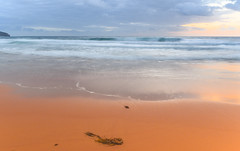 Sunrise Seascape and Beach (Merrillie) Tags: daybreak shoreline sand landscape nature australia surf rocks killcarebeach newsouthwales waves centralcoast nsw clouds beach ocean water coastal dawn photography sea sky seascape waterscape coast killcare outdoors