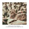 Merry Christmas 🐈 (Monica Muzzioli) Tags: cat kitty christmas christmastree portrait bokeh colors sundaylights christmasspirit gatto domestico animale blur coth5 natale