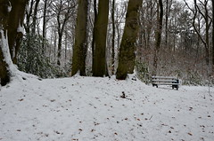 Wald with snow (JaapCom) Tags: jaapcom snow trees tree sneeuw bomen bos wintertime winter werven vinkennest dutchnetherlands naturel nikond5100 flickr