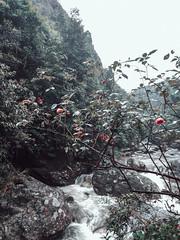 https://www.instagram.com/kora.fj/ (Kora FJ) Tags: sansảhồ làocai vietnam vn