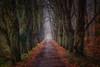 walk in the forest (radonracer) Tags: wald forest allee niederrhein geldern haag