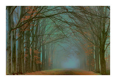 Autumn Liesbos Breda (cees van gastel) Tags: ceesvangastel canoneos550d autumn herfst bomen trees liesbos breda liesbosbreda herfstkleuren autumncolours natuur nature landscape landschap noordbrabant nederland netherlands