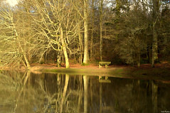 Reflections (Vak Photos) Tags: nature bench winter pond lake reflection reflections trees banc arbres hiver étang lac