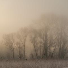 Trees in the mist (andreasbrink) Tags: angera italy landscape winter bruschera fog lagomaggiore mist fccfog