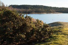 The Highlanders location | Doctor Who | Frensham Great Pond | Frensham Common-16 (Paul Dykes) Tags: frenshamcommon waverleydistrict england uk unitedkingdom countryside walk gb doctorwho filminglocation doctorwholocation annekewills hannahgordon season4 patricktroughton seconddoctor missingepisodes frenshamgreatpond