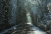 Frostbite (der_peste) Tags: winter frost frosty snowy icy ice light cold coldtones dark lurky murky trees way path pathway road