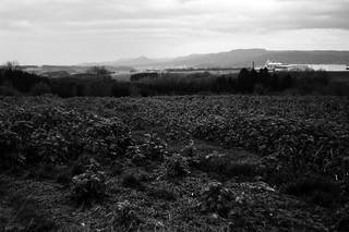 TRI-X Landscape (Leica M6)