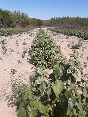 "GWD Forestry Urucum Brasil <a style=""margin-left:10px; font-size:0.8em;"" href=""http://www.flickr.com/photos/47172958@N02/38556148165/"" target=""_blank"">@flickr</a>"