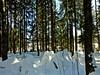 Winterwald (fleckchen) Tags: winter winterlandschaft winterlandschaften winterwald wintertime winterlich winterwälder winterbilder winterlandscape winterszene winterspaziergang schnee schneelandschaft snow snowcape heimat vogtland sachsen deutschland germany