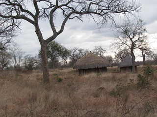 Zimbabwe Cape Buffalo Hunt 30