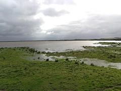 Lønborg Bird Watching (Aleksandr Zykov) Tags: jutland denmark lønborg lake birdwatching
