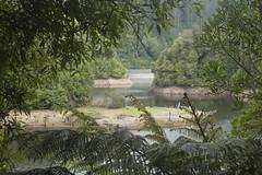Turitea Dam (Tararua Light Watch) Tags: mikewatkinsphotography turitea turiteareserve waterreservoir reservior palmerstonnorth nzbush waterstorage tararualightwatch