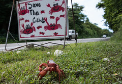 Save the crabs (OzzRod) Tags: pentax k1 hdpentaxdfa28105mmf3556 crab sign safety danger roadcrossing christmasisland