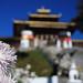 Flowers at the Druk Wangyal Lhakhang Temple. Dochula Pass, Bhutan