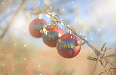 Let It Snow.... (KissThePixel) Tags: christmas olivetree garden ballballs bow snow december bokeh cold nikondf nikon 50mm nikkor nikkor12 f12 light creativephotography macro stilllife stilllifephotography