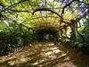 PC030047t copy (Mark_Daniels) Tags: j23k olympus mzuiko 918 f456 wisteria jardín botánicohistórico la concepción malaga spain