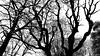Torino's Tree (MrTheEdge7) Tags: turin torino italy italia parcodelvalentino piedmont piemonte trees tree branches blackandwhite bw silhouette treesilhouette