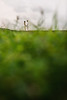 YOON-W252-6219 (geeshan bandara | photography) Tags: adrian adrianandyoon galle gallefort geeshanbandara geeshanbandaraphotography postweddingshoot srilankansouth ugweddings yoon yoonw252 colomboweddingphotographers destinationweddings documentaryweddingphotographers documentaryweddingphotography srilankaweddingphotographers srilankanweddingphotography treebeard treebeardphoto ug ugphotography weddingphotography weddingphotojournalism weddingphotojournalist weddingsinsrilanka ©geeshancom