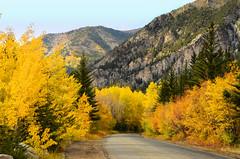 Autumn leaves in the Rocky Mountains of Colorado (Gail K E) Tags: colorado rockymountains usa aspens autumn