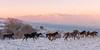 Wild horses of Bosnia (Martin Zurek) Tags: livno federacijabosneihercegovine bosnienundherzegowina ba horse wild wildhorse sunrise mountains landscape adventure photojournalism travel