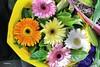 Flores para navidad                   IMG_6858_qhdr (XimoPons : vistas 4.000.000 views) Tags: ximopons australia sydney oceania flores flowrs
