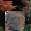 Scene at the Temple Garden (seiji2012) Tags: 塩山 放光寺 山門 ボケ 紅葉 山梨県 bokeh yamanashi enzan autumn leave temple garden