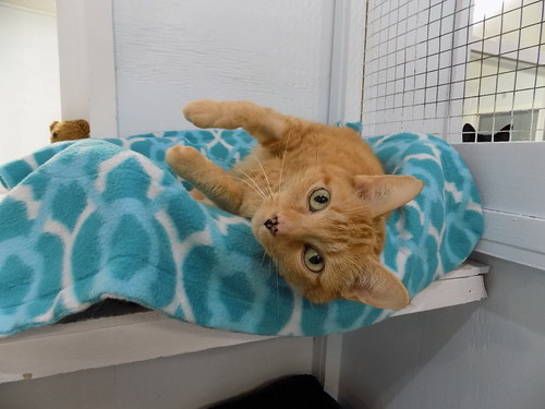 Claire - 13 year old spayed female