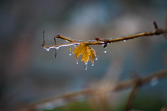Autumn Has Died (Evan's Life Through The Lens) Tags: camera sony a7rii lens glass vintage 135mm f28 minolta outdoors gloomy cold winter ice beautiful color trees foliage green orange
