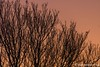 color (Marjon van der Vegt) Tags: denhaag winter piano avondlucht sneeuwpoppen engelen wandelvondst thorbeckelaan opstraat straatfotografie