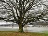 Eiche im Winter (dorotheazinsser) Tags: eiche auhof eisenbach lauterbach vogelsberg oberhessen hessen bäume