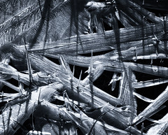 Ice Abstract (Sue MacCallum-Stewart) Tags: ice ribbons cold grass blackwhite abstract
