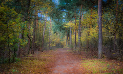 A carpet donated by Mother Nature (Ingeborg Ruyken) Tags: dropbox autumn november rosmalen bomen trees forest bos 500pxs fall natuurfotografie 2017 rosmalensezandverstuiving flickr herfst