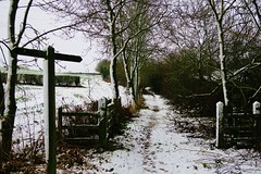 Daventry Country Park (Alex J Donohue) Tags: daventrydistrict winter snow northamptonshire northants east midlands uk daventrycountrypark