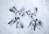 Snow Angels (Zoom In, Click On, Check Out) Tags: star wars starwars stormtrooper stormtroopers first order firstorder force awakens snow angel angels