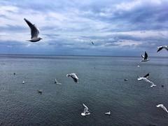 Flying (basiamarcisz) Tags: